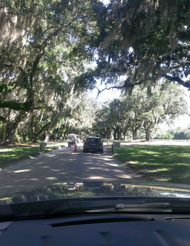 Such a beautiful drive into Boone Hall Plantation.